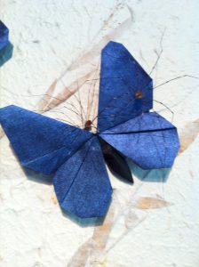 harvestmen_on_butterfly.jpg
