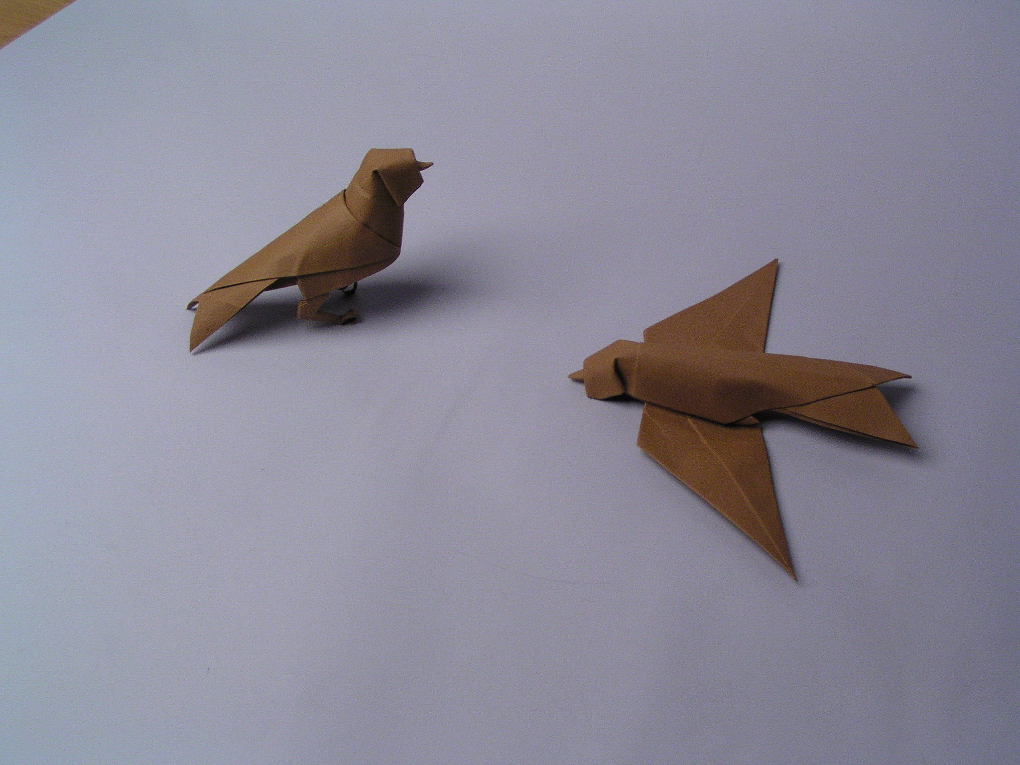 simple swallows
